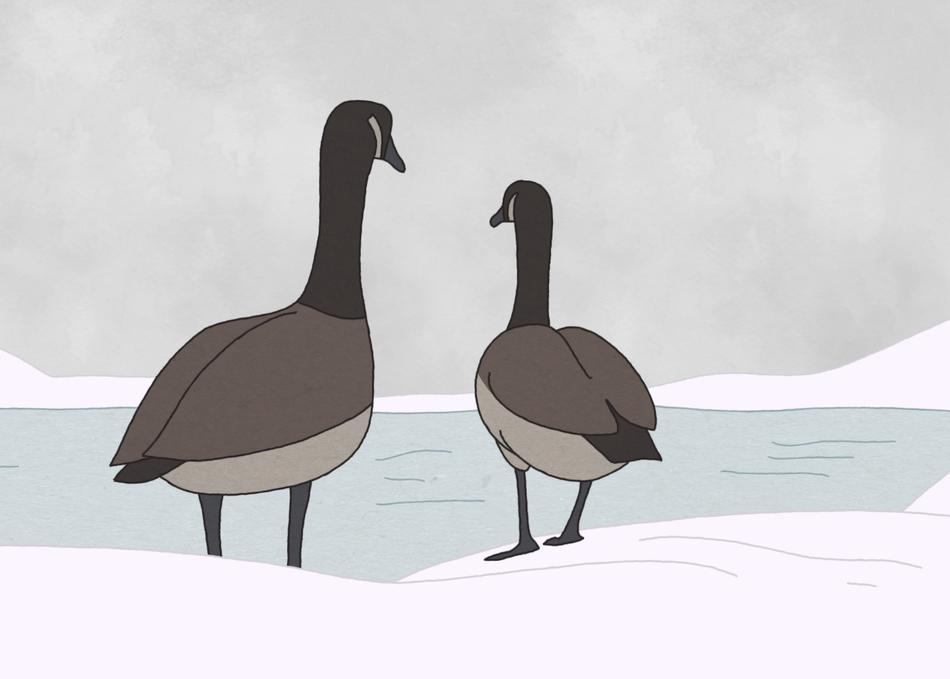Hudson Geese